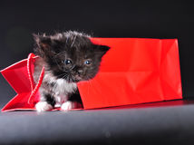 Black kitten walking out of gift bag Royalty Free Stock Images