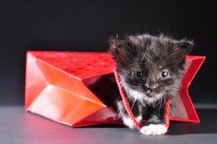 Black kitten walking out of gift bag Royalty Free Stock Photos