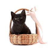 Black kitten in a wattled basket with a ribbon Stock Photography