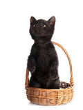 Black kitten in a wattled basket. Royalty Free Stock Image