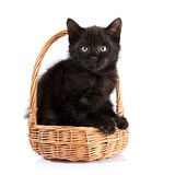 Black kitten in a wattled basket. Stock Image