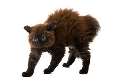 Black kitten Stock Images