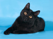 Black kitten with white chest and orange eyes lies on blue. Background Royalty Free Stock Photography
