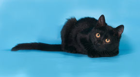 Black kitten with white chest and orange eyes lies on blue. Background Stock Photo