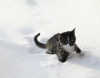 Black kitten on a white snow royalty free stock image