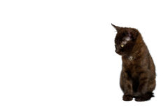 Black kitten white spot Royalty Free Stock Photos