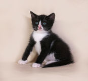 Black kitten with white spots sitting on gray Stock Photography