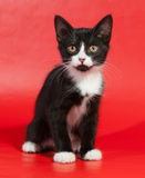 Black kitten with white spots sitting on red Stock Images