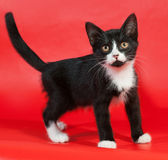 Black kitten with white spots stands on red Royalty Free Stock Photo