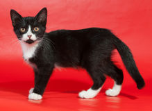 Black kitten with white spots stands on red Stock Photo