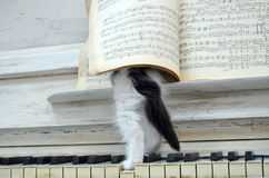 Black kitten with white stripes. Playing the piano Stock Image