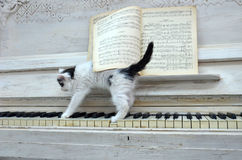 Black kitten with white stripes. Playing the piano Royalty Free Stock Photo
