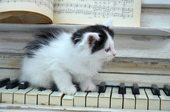 Black kitten with white stripes. Playing the piano Stock Images