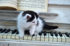 Black kitten with white stripes. Playing the piano Stock Photography