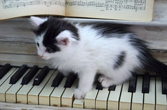 Black kitten with white stripes. Playing the piano Royalty Free Stock Photos