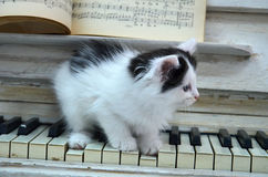 Black kitten with white stripes. Playing the piano Royalty Free Stock Image