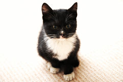 Black kitten with a white tie and gloves Stock Photo