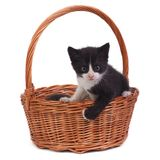 Black kitten in a wicker basket  on white Stock Photography
