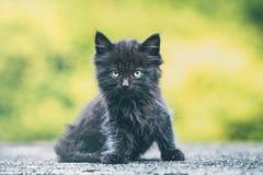 Black kitten. On yellow background royalty free stock image