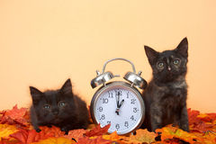 Black kittens in autumn leaves with clock, daylight savings concept royalty free stock photography