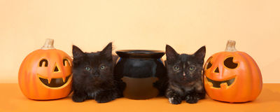 Black kittens happy halloween banner format Stock Images