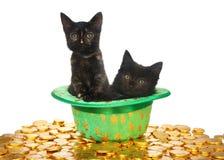 Black kittens in leprechaun hat stock photo
