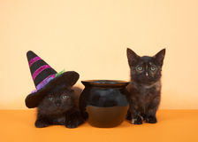 Black kittens next to cauldron, one wearing witch hat royalty free stock photos