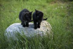 Black kittens on the stone. Stock Photo