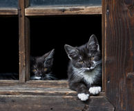 Black kittens Royalty Free Stock Photography