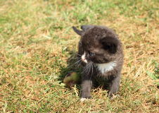 Black kittie Royalty Free Stock Images