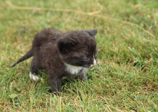 Black kittie Stock Photography
