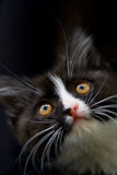 Black kitty Stock Photo