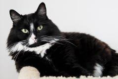 Black Kitty Royalty Free Stock Photo
