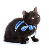 Black kitty with a blue tape. Royalty Free Stock Photos