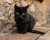 Black kitty. A black cat from Mount Athos, Greece Royalty Free Stock Image
