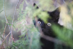 Black kitty Royalty Free Stock Photography