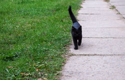 Black kitty is running on the road stock photos