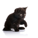 Black kitty. Stock Photos