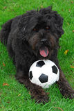 Black Lab/Bouvier 1. Black Lab/Bouvier des Flandres dog with soccer ball lying in the grass stock photo
