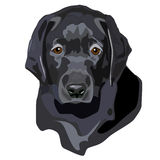 Black Lab Puppy Royalty Free Stock Photography