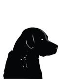Black Labrador. An illustrated portrait of a black Labrador dog, isolated on a white background Stock Photography
