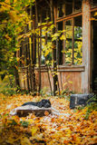 Black labrador autumn in nature, vintage stock image
