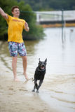 Black Labrador Dog Playing in the Water. This is an image of a man throwing a ball for a black Labrador Retriever to fetch Stock Image