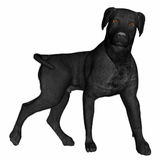 Black labrador dog standing - 3D render Stock Images