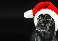 Black labrador mix dog wearing a Santa hat. Low key studio portrait of a black labrador mix dog wearing a Santa hat Stock Photo
