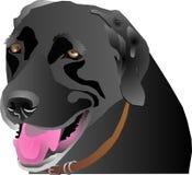 Black Labrador profile Stock Image