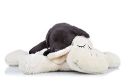 Black labrador puppy sleeping Stock Photo