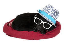 Black labrador puppy wearing funny hat and glasses Stock Images
