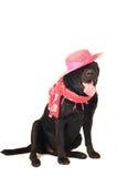Black labrador retreiver portrait. Isolated on white Royalty Free Stock Photos