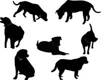 Black Labrador silhouettes.. Group of Black Labrador silhouettes, over white and isolated for many usages Royalty Free Stock Images